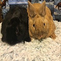 Other/Unknown Mix for adoption in Idaho Falls, Idaho - Carrot and Val