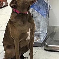 Adopt A Pet :: Patti - Pearland, TX