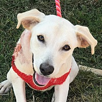 Adopt A Pet :: Flannery - Indianapolis, IN