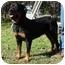 Photo 2 - Rottweiler Dog for adoption in Austin, Texas - Bear