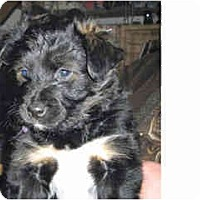 Adopt A Pet :: Dasher - Scottsdale, AZ