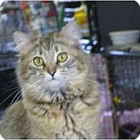 Adopt A Pet :: Bunny - Maxwelton, WV