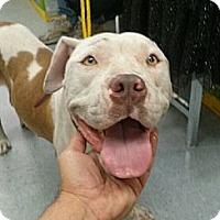 Adopt A Pet :: Hazel - Hollywood, FL