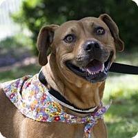 Adopt A Pet :: Julianna - Gainesville, FL