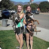 Adopt A Pet :: Woodlyn - Santa Barbara, CA
