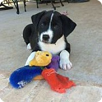 Adopt A Pet :: Wynne - Austin, TX