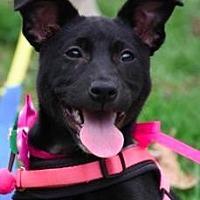 Adopt A Pet :: Lydia - San Ramon, CA