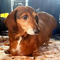 Adopt A Pet :: Katy - Decatur, GA
