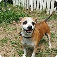 Adopt A Pet :: Lexi - Bartlett, TN