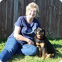 Adopt A Pet :: Octavia - Elyria, OH