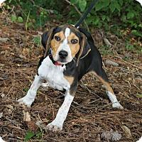 Adopt A Pet :: Flash Gordon 💚 DOB 3/26/17! - Saratoga Springs, NY