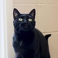 Adopt A Pet :: Sergei - Homewood, AL
