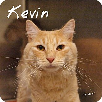 Domestic Shorthair Cat for adoption in Pleasantville, New Jersey - Kevin