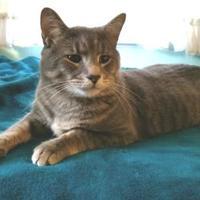 Adopt A Pet :: Catnick - Baltimore, MD