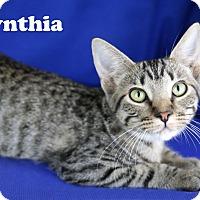 Adopt A Pet :: Cynthia - Carencro, LA