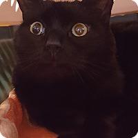 Adopt A Pet :: Black Raspberry - Salisbury, MA