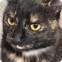 Adopt A Pet :: KiKi - Amarillo, TX