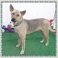 Adopt A Pet :: STUART-avail 8/18 - Marietta, GA