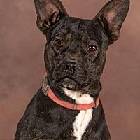 Adopt A Pet :: Spencer - Cedar Crest, NM