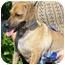 Photo 1 - Dachshund/Chihuahua Mix Dog for adoption in Bellflower, California - Charlie