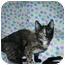 Photo 3 - Domestic Shorthair Cat for adoption in Santa Rosa, California - Meredith