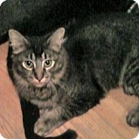 Adopt A Pet :: Marcel - Colorado Springs, CO
