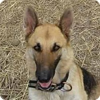 Adopt A Pet :: Shelly ADOPTEDF!! - Antioch, IL