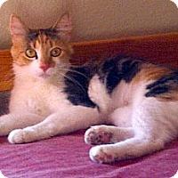 Adopt A Pet :: Rita - Escondido, CA