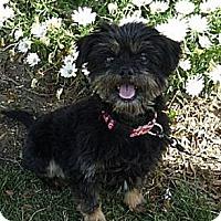 Adopt A Pet :: Cindy - ADOPTED - Warwick, NY