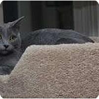 Adopt A Pet :: Kimchi - Arlington, VA