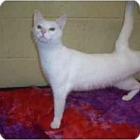 Adopt A Pet :: Toby - Bartlett, TN
