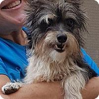 Adopt A Pet :: Shiloh - Baileyton, AL