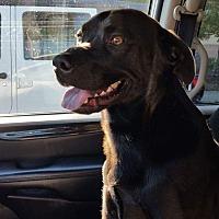 Adopt A Pet :: VADER - Massillon, OH