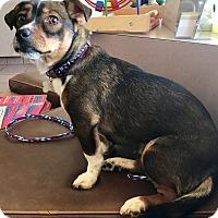 Adopt A Pet :: Santana - Las Vegas, NV