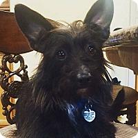Adopt A Pet :: BRYAN - Mission Viejo, CA