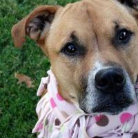 Adopt A Pet :: Twyla - Ashtabula, OH
