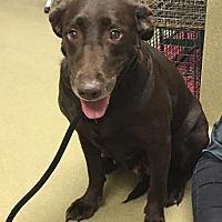 Adopt A Pet :: Lizzie - Towson, MD