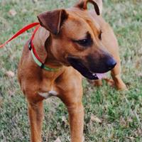 Adopt A Pet :: Gabe - Cleburne, TX