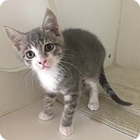 Adopt A Pet :: Kira - Breese, IL