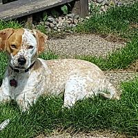 Adopt A Pet :: Juno - Minnetonka, MN