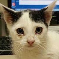Adopt A Pet :: MANUEL - Rogers, AR