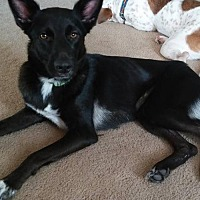 Adopt A Pet :: Jayla - Abbeville, LA