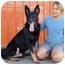Photo 2 - German Shepherd Dog Mix Dog for adoption in Los Angeles, California - Wilton von Werdenberg