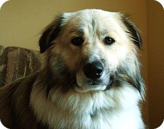 Collie Mix Dog for adoption in Harrisburgh, Pennsylvania - Benji