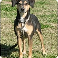 Adopt A Pet :: Bono - Carencro, LA