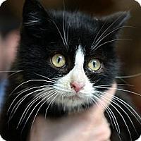 Adopt A Pet :: Rudy Valentino - Brooklyn, NY