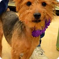 Adopt A Pet :: Roxie - Rockaway, NJ