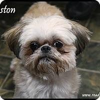 Adopt A Pet :: Winston - Rockwall, TX