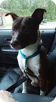 Terrier (Unknown Type, Medium) Mix Dog for adoption in Goldsboro, North Carolina - Cartier