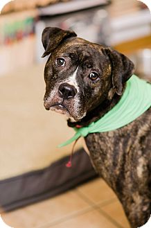 Boxer Mix Dog for adoption in Seneca, South Carolina - Carmen $125
